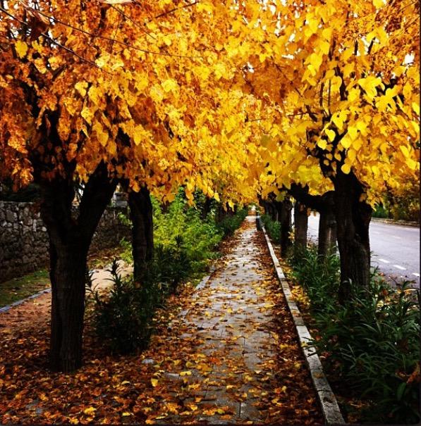 Como combatir los díntomas negativos del otoño, blog Residencia avenida de san luis