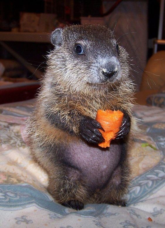 dia de la marmota en la Residencia