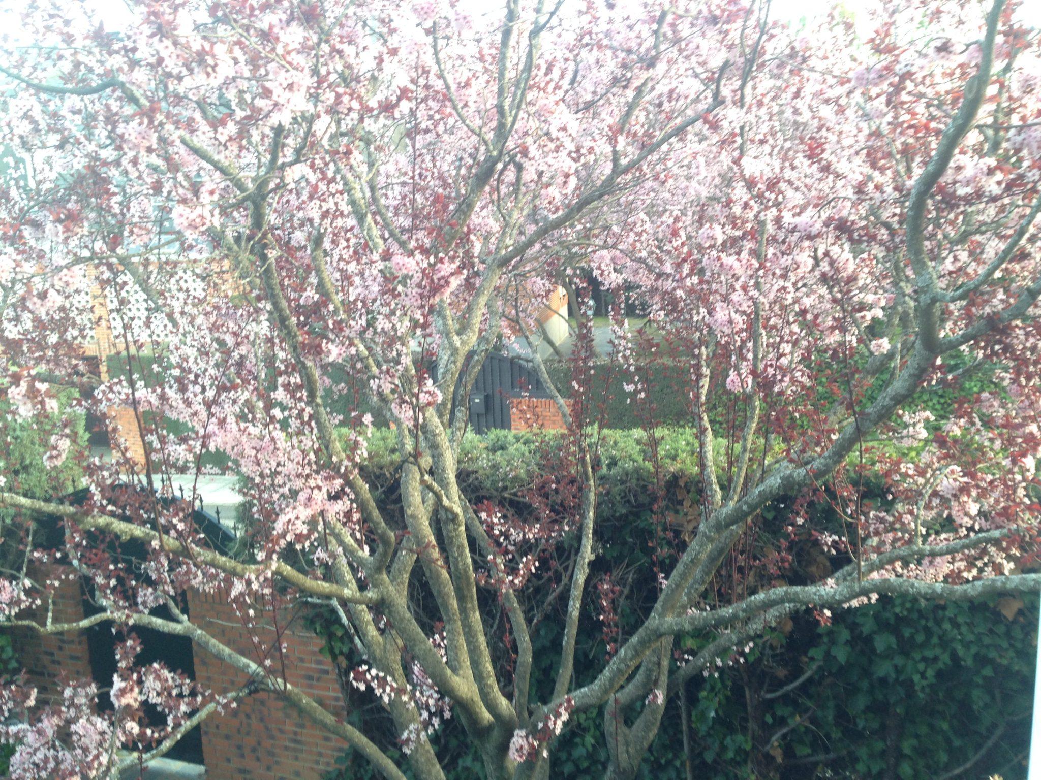 primavera y personas mayores